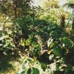 Awafarm2001