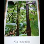 poster-hanakapi-ai