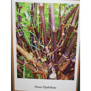 poster-opihikao